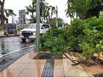 Petugas Pangkas Pohon Tumbang Akibat Angin Kencang di Surabaya