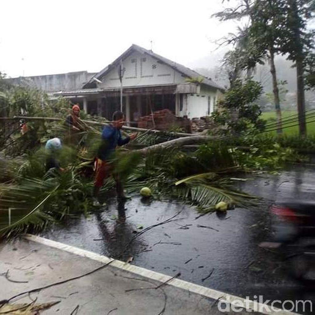 Angin Kencang Tumbangkan Pohon dan Padamkan Listrik di Pacitan