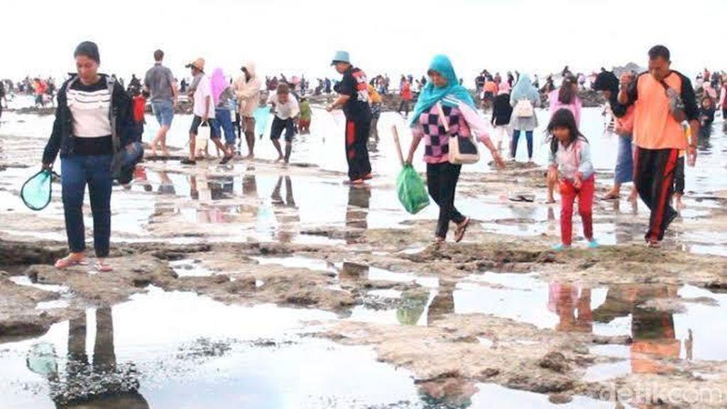 Mengenal Tradisi Bau Nyale yang Unik dari Lombok