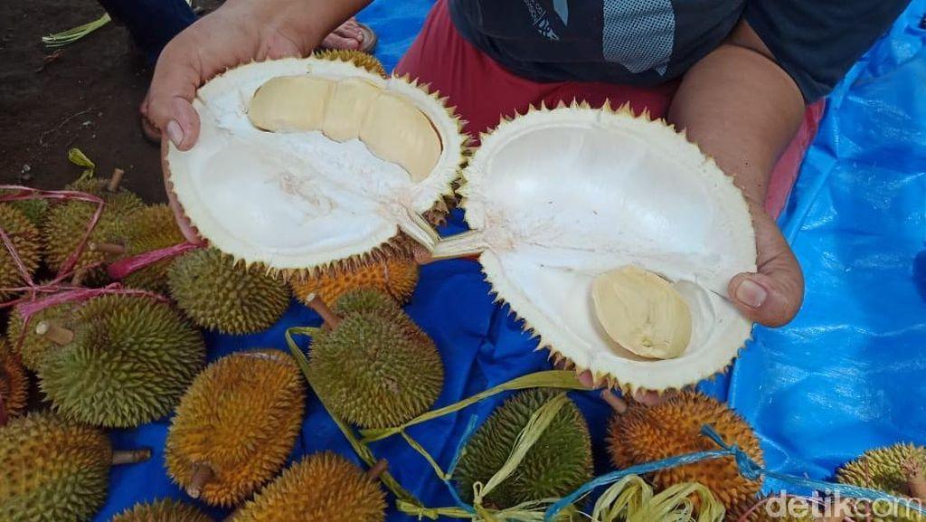 Garing Legit Durian Wajit Khas Pangandaran Jadi Buruan Pencinta Durian