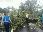 Hujan Deras, Sejumlah Pohon juga Tumbang di Jalan Tol Sidoarjo