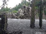 Semburan Gas Setinggi 20 Meter Muncul di Pemukiman Warga di Aceh Utara