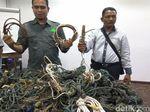 Ribuan Jerat Ditemukan di Leuser Aceh, Dipakai Tangkap Harimau-Gajah