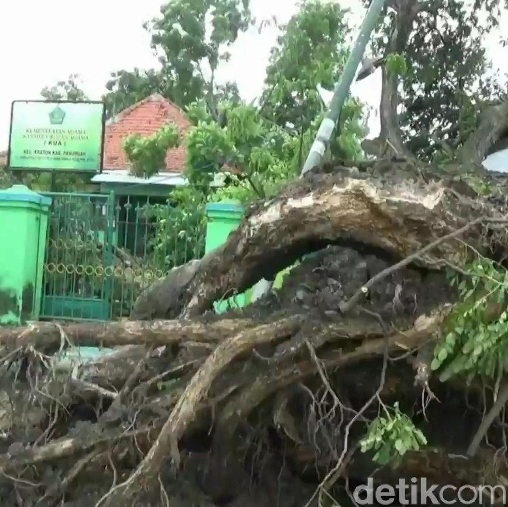 Cuaca Ekstrem, BPBD Imbau Warga Pasuruan Waspada Pohon Tumbang