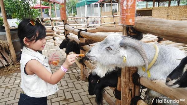 Scientia Square Park menawarkan traveler berinteraksi langsung dengan satwa. Anak-anak bisa berfoto dan memberi makan hewan yang mereka sukai (Amelia Sewaka)