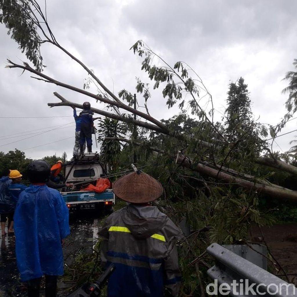 Angin Kencang Landa Sleman, Pohon Tumbang dan Rumah Rusak