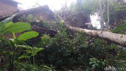 Angin Kencang Rusak Rumah danTumbangkan Pohon di Trenggalek