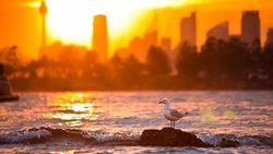 Suhu Udara New South Wales Mencapai 42 Derajat