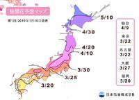 Jadwal bunga sakura mekar 2019 (Japan Meteorological Corporation)