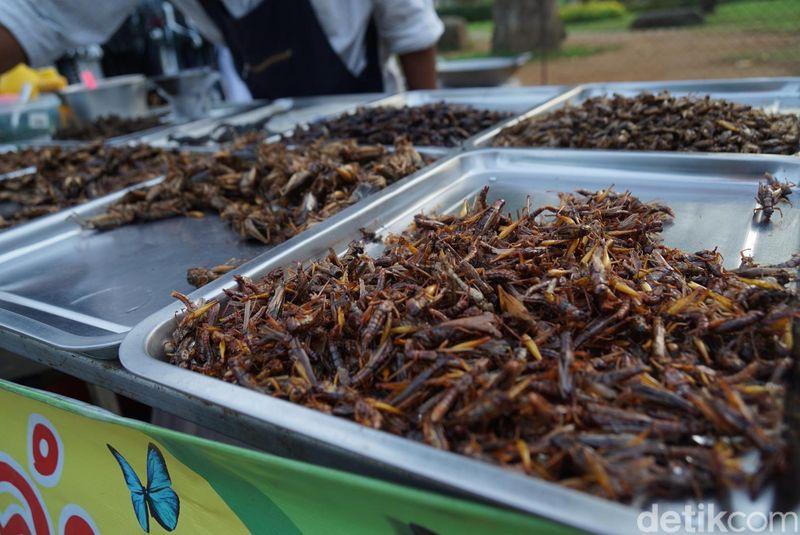 Ada jangkrik, ulat sagu, ulat daun, belalang sampai jangkrik. Semua serangga itu disajikan terpisah di atas mapan dan disusun di atas meja. (Syanti/detikTravel)
