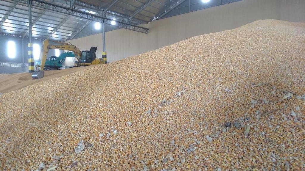 100.000 Ton Jagung Asal Brasil Mulai Dipasok ke Peternak