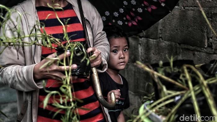 Warga Marunda Jakarta Utara menanam 2.000 bibit lavender untuk cegah DBD (Foto: Pradita Utama)