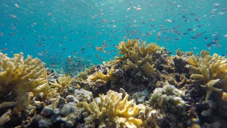 alam bawah laut Pulau Satonda