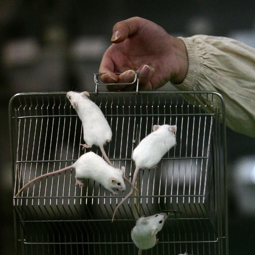Begini Jadinya jika Tikus Dibawa ke Stasiun Luar Angkasa