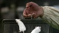Otak Tikus dan Manusia Mirip, Tapi Bisa Bereaksi Beda pada Obat