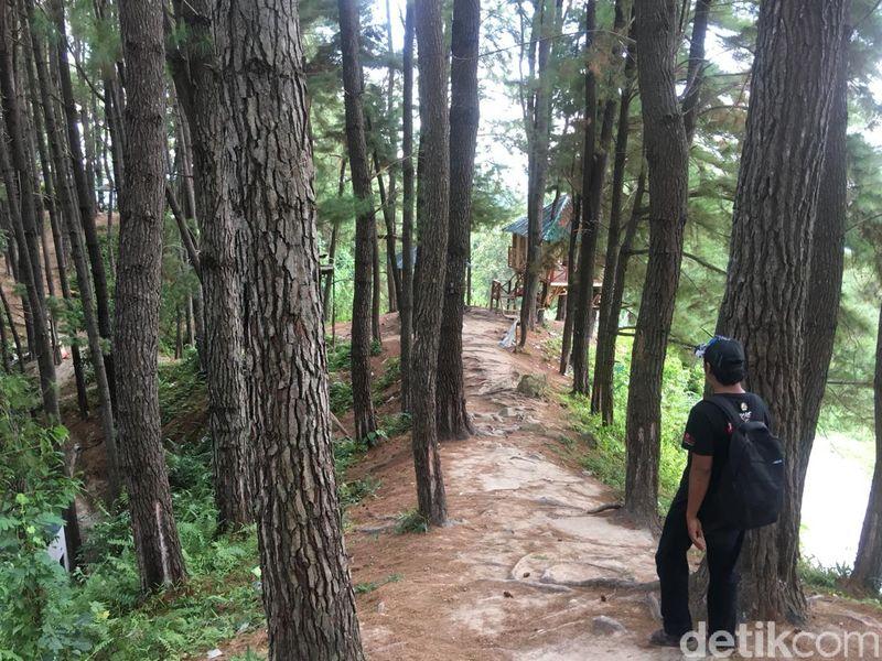 Tak hanya Bantul atau wilayah lainnya di Pulau Jawa, Polewali Mandar di Sulawesi Barat juga punya wisata hutan pinus yang cantik. Inilah Hutan Pinus Palatta (Abdy Febriady/detikTravel)