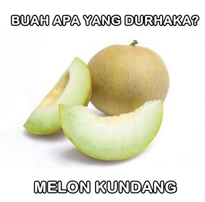 Nahloh, ada buah yang durhaka juga ternyata. Buahnya bernama melon kundang. Foto: Istimewa