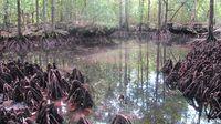 Danau Udang Merah (Afif Farhan/detikTravel)
