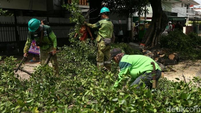 Dinas Kehutanan DKI Jakarta melakukan pemangkasan pohon di kawasan Tebet, Jakarta. Hal itu untuk mencegah pohon tumbang di musim hujan.