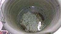 Ember ini berisi jentik nyamuk yang berhasil dikumpulkan Satria dalam sehari.