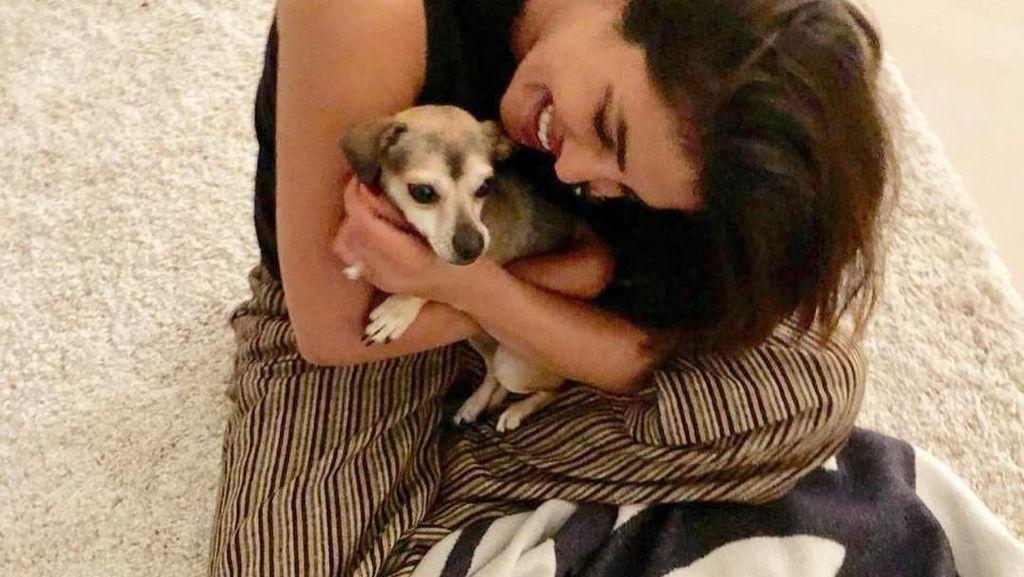 Ini Diana, Anjing Priyanka Chopra yang Gaya Hidupnya Lebih Mewah dari Kamu