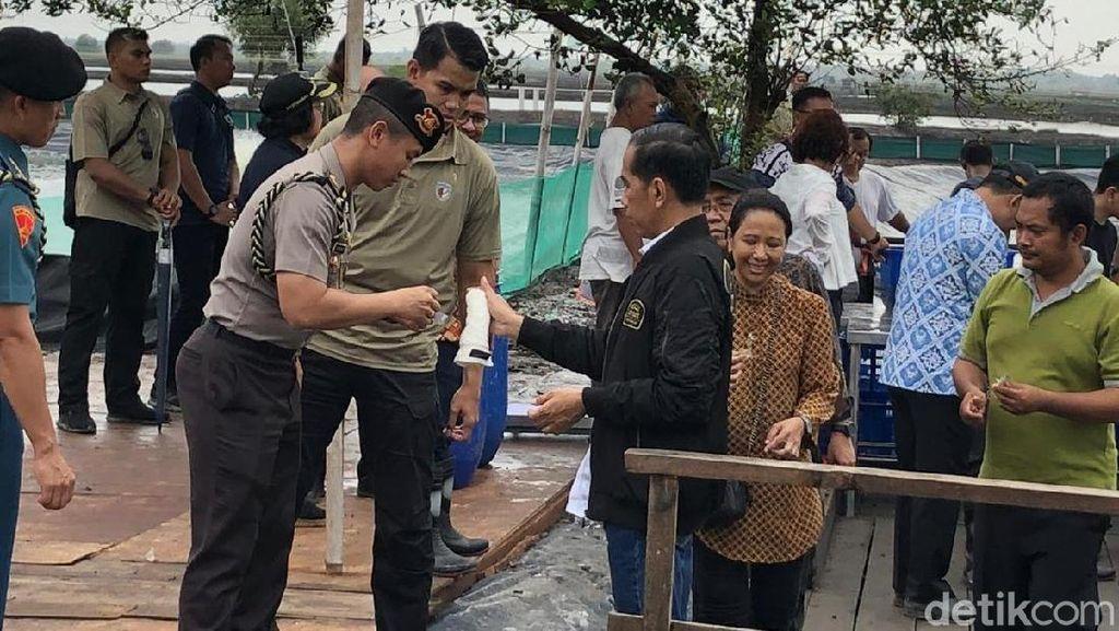 Jokowi soal Ternak Udang: Modal Rp 180 Juta Bisa Dapat Rp 320 Juta