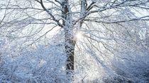 Indahnya Alam Bernuansa Salju, Seperti Wallpaper Komputer!