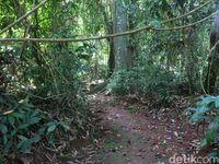 Bagian dalam hutan (Dadang/detikTravel)