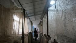 Belatung hingga saat ini masih dimanfaatkan untuk keperluan medis. Di China ada peternakan khusus yang mengembangkannya.