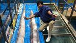Foto: Ikan Langka Pertanda Bencana yang Meresahkan Jepang
