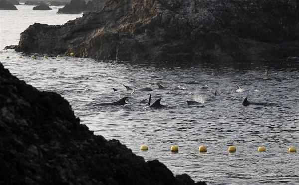 Daging lumba-lumba nantinya akan dijual untuk dikonsumsi, padahal mengandung merkuri yang berbahaya buat tubuh manusia (Reuters)