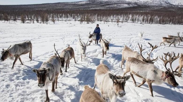 Foto: Suku Dukha penggembala rusa di pedalaman Mongolia (Taylor Weidman/BBC Capital)