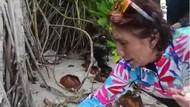 Gara-gara Sampah di Pantai Belitung, Menteri Susi Geram