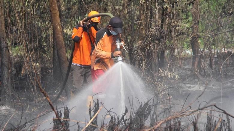 BRG Restorasi 77.528 Hektare Lahan Gambut yang Rusak di Jambi