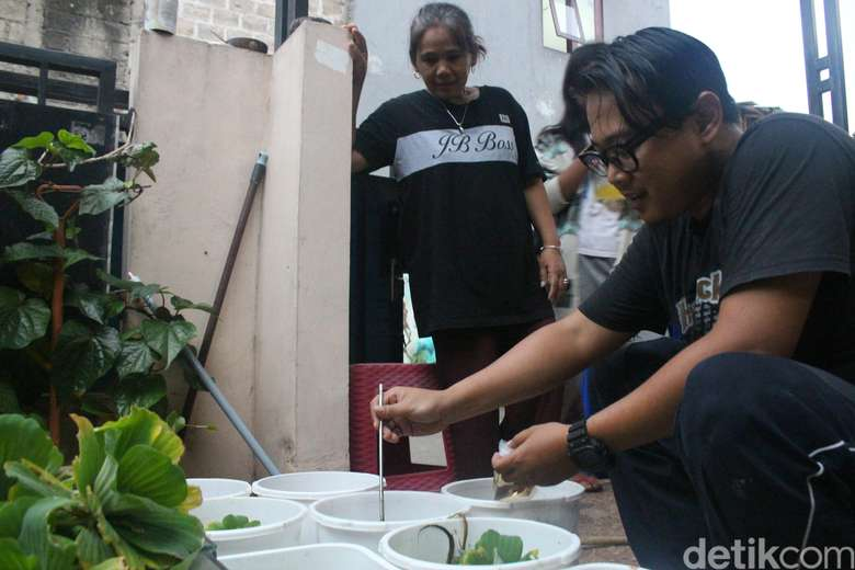 Ega adalah salah satu pencinta ikan cupang yang juga peduli terhadap ancaman demam berdarah dengue yang tengah mewabah di kediamannya, di Jakarta Selatan. Foto: Kireina S. Cahyani/detikHealth