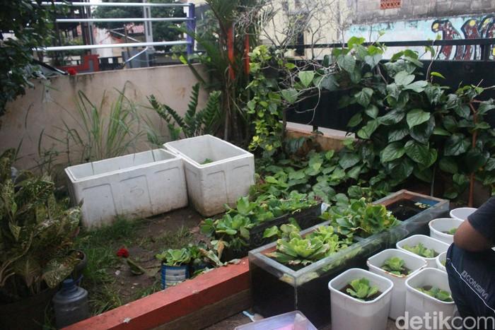 Saat mendengar kabar mengenai tingginya angka yang terkena DBD di kawasan Jakarta Selatan ini, Ega turut ingin berkontribusi memutus rantai perkembangbiakan nyamuk-nyamuk di lingkungannya dengan memanfaatkan koleksi ikan cupang. Foto: Kireina S. Cahyani/detikHealth