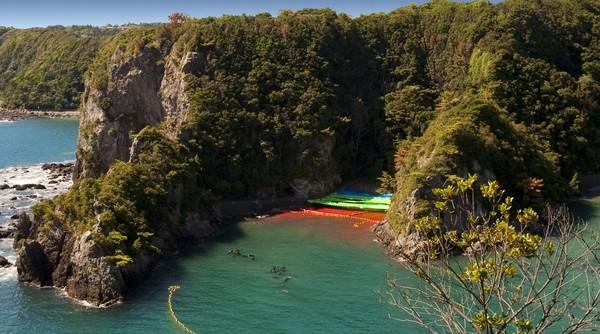 Nelayan Taiji berdalih kalau perburuan lumba-lumba merupakan suatu tradisi. Akan tetapi, organisasi pecinta satwa di seluruh dunia terang-terang mengecamnya (International Marine Mammal Project)