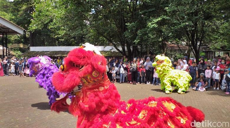 Menengok Atraksi Barongsai di antara Satwa Kebun Binatang Bandung