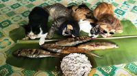 Unduh 68+  Gambar Kucing Lucu Bikin Ngakak Imut HD
