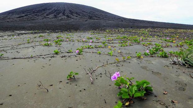 Peneliti NASA Temukan Pulau Baru Hasil Letusan Gunung Api di