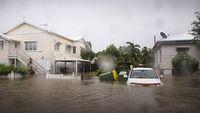 Banjir Besar, Buaya di Australia Panjat Pohon