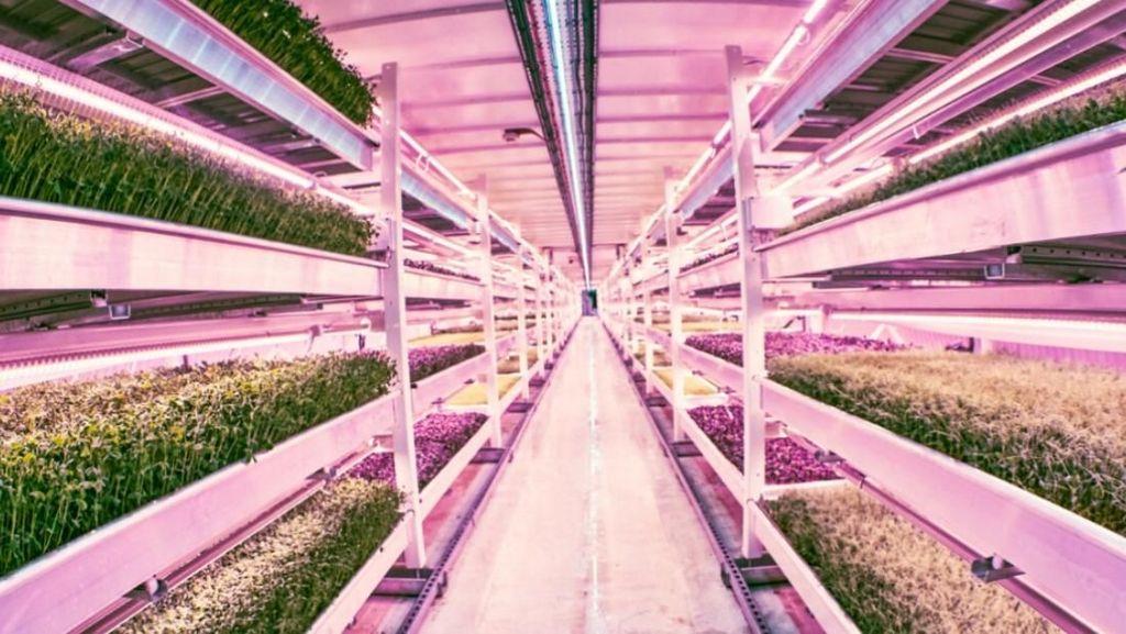 Super Unik! Kebun Bawah Tanah Pertama di Dunia