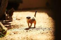 Mau Lihat Mantan Pacar Kamu 'Dimangsa' di Kebun Binatang? Ikutan Acara Ini