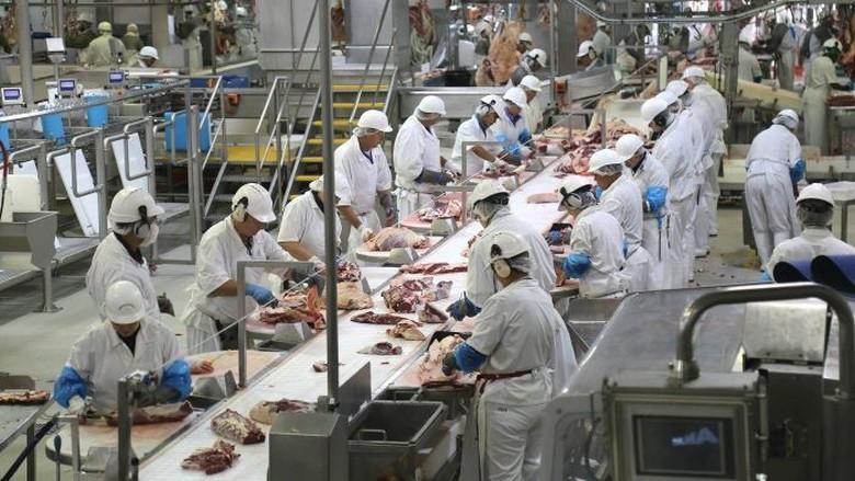 Kerja Keras Anak-anak Muda Indonesia di Pabrik Daging Australia