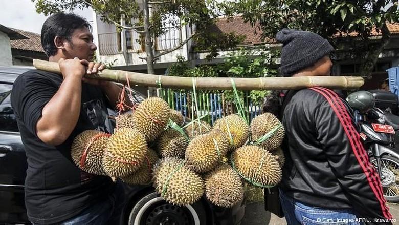 Demam Durian di China Percepat Deforestasi di Malaysia, Kok Bisa?