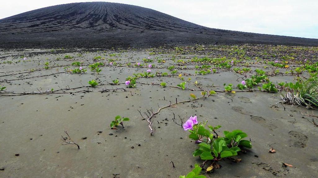 Pulau Baru Ini Bikin Heran Ilmuwan NASA, Kenapa?