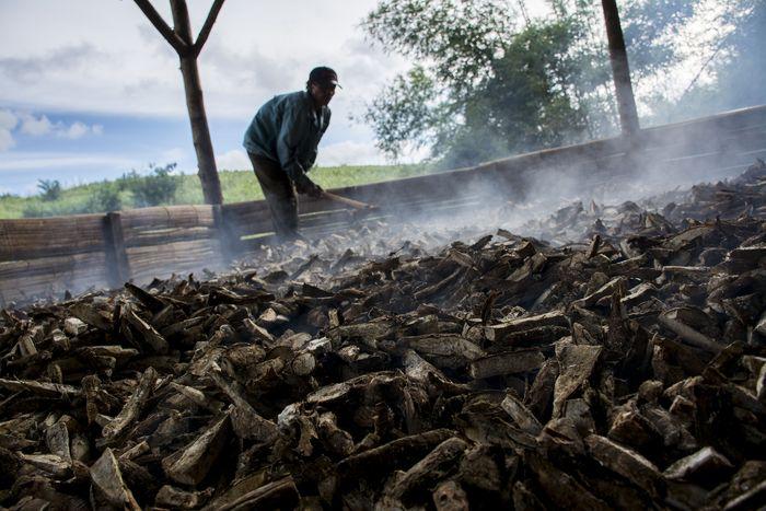 Pekerja memanggang gaplek di salah satu industri rumahan pengolahan singkong, Jampang Tengah, Kabupaten Sukabumi, Jawa Barat, Rabu (6/2/2019). Dalam sehari, industri rumahan tersebut mampu memproduksi gaplek singkong hingga lima ton dengan harga jual Rp3500 - Rp4000 per kilogram serta diekspor ke negara China. ANTARA FOTO/Nurul Ramadhan.