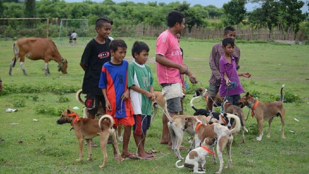 Kendalikan KLB Rabies di NTB, Anjing Warga Divaksin Ramai-ramai