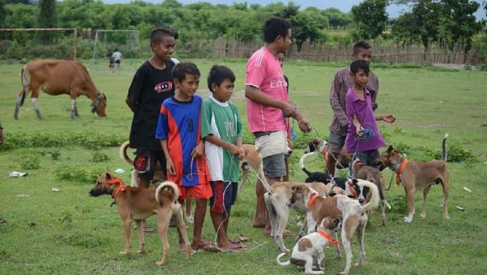 Warga Dompu membawa anjingnya untuk mendapat vaksin rabies. (Foto: Kementerian Pertanian/FAO)