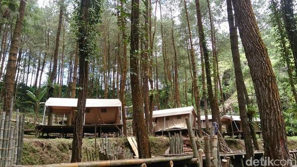 Badan Otorita Borobudur (BOB) siap luncurkan destinasi wisata baru yakni Glamping DLoano dan Pasar Menoreh di Desa Sedayu, Kecamatan Loano, Kabupaten Purworejo (Rinto/detikTravel)